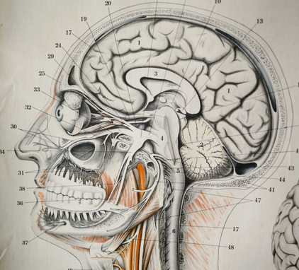 The Amazing Brain, Lunds Universitet Program picture